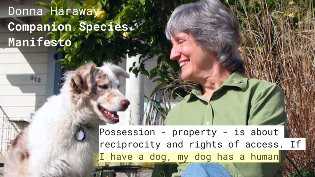 Donna Haraway Quote